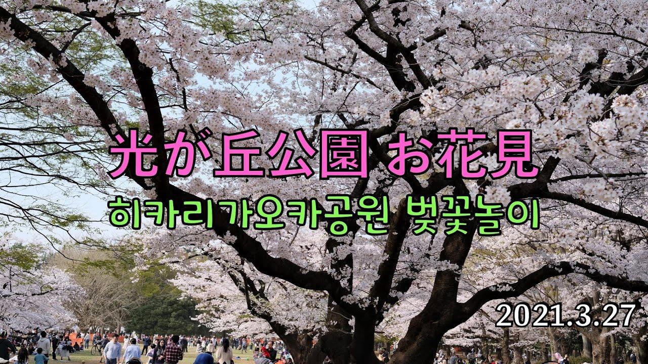 東京 光が丘公園 お花見 / さくら花見 | X-S10 / GoPro7